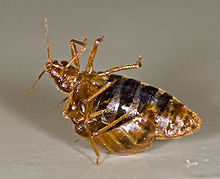 bed bugs orange county la riverside